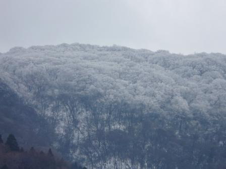 東温市上林 雪景色 4