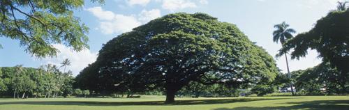 「この木なんの木気になる木」で有名な木ってどこにあるの?