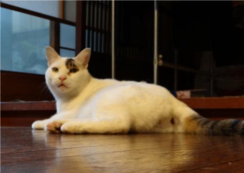 世界で一番猫をたくさん飼っている国はどこ?