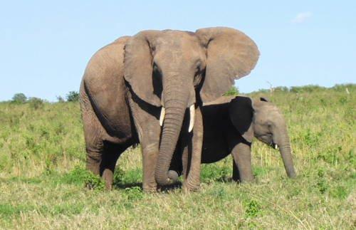 世界一大きい動物って何?