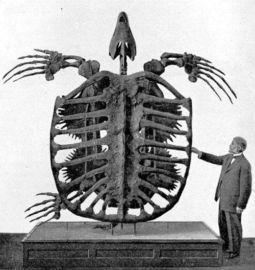 史上最大のカメは人間よりも遥かに大きかった!