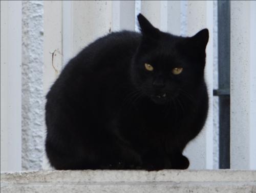 家猫と野良猫の寿命は3倍も違う!?