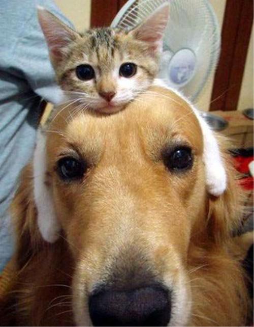 癒される・・・世界一かわいい猫型ヘッドホン