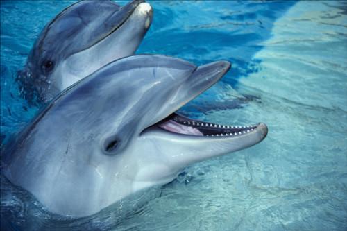 もしもイルカが完全に眠ったら溺れ死んでしまう?