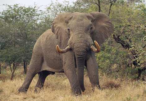 ゾウの一日の排便量ってどれくらい?