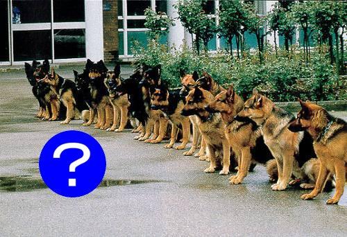 警察犬の試験官がまさかの