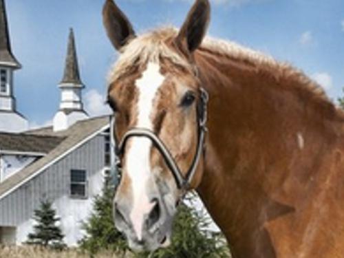 世界最大の馬ってどれくらい大きいの?