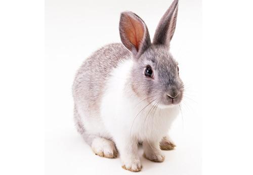 ウサギの視野はとんでもなく広い!