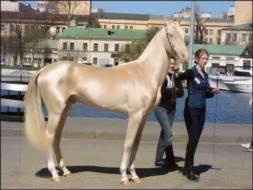 世界一美しい馬はこんな馬