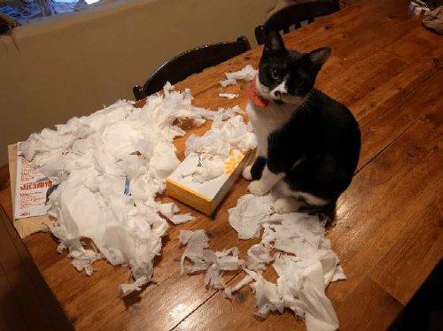 ついやっちゃう。紙が大好きな猫(写真3枚)