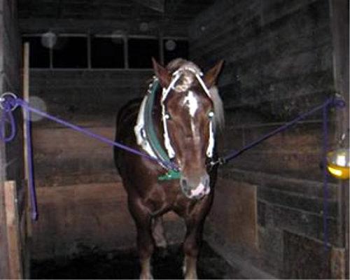 馬は夜でもよく目が見えている?