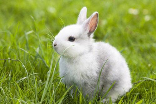 世界一ウサギ。その大きさは・・・