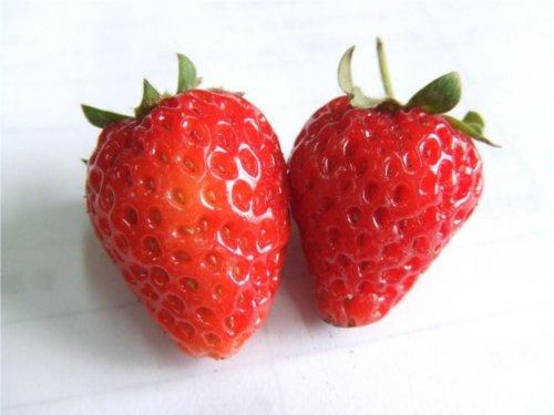 イチゴで歯を磨くと黄ばんだ歯が白くなる?