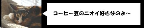 日本で唯一スタバがない都道府県ってどこ?