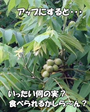 201306156.jpg