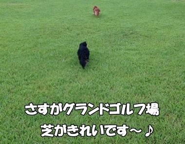 201306183.jpg