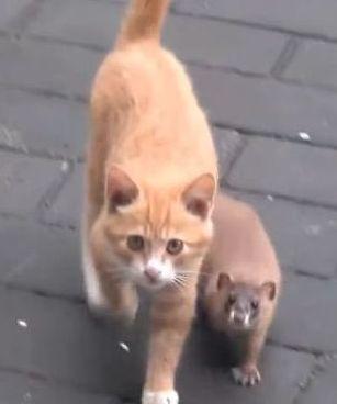 猫とイタチ