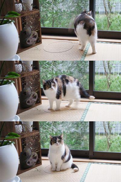 猫ホイホイ6