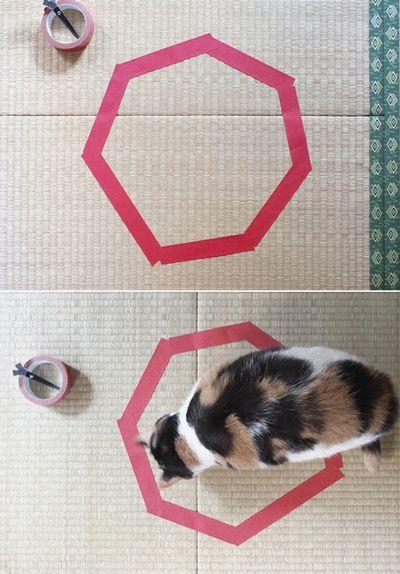 猫ホイホイ1