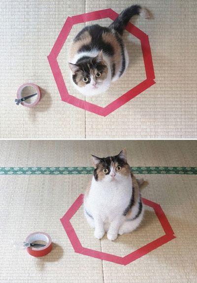 猫ホイホイ2