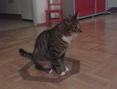 猫ホイホイ5