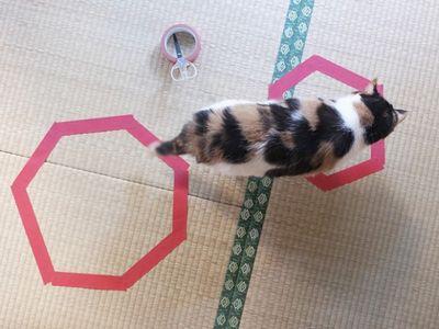 猫ホイホイ3
