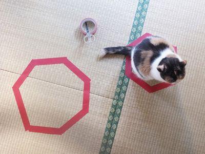 猫ホイホイ4