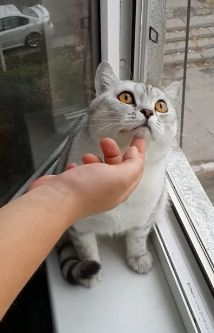 cat凝視するfc2
