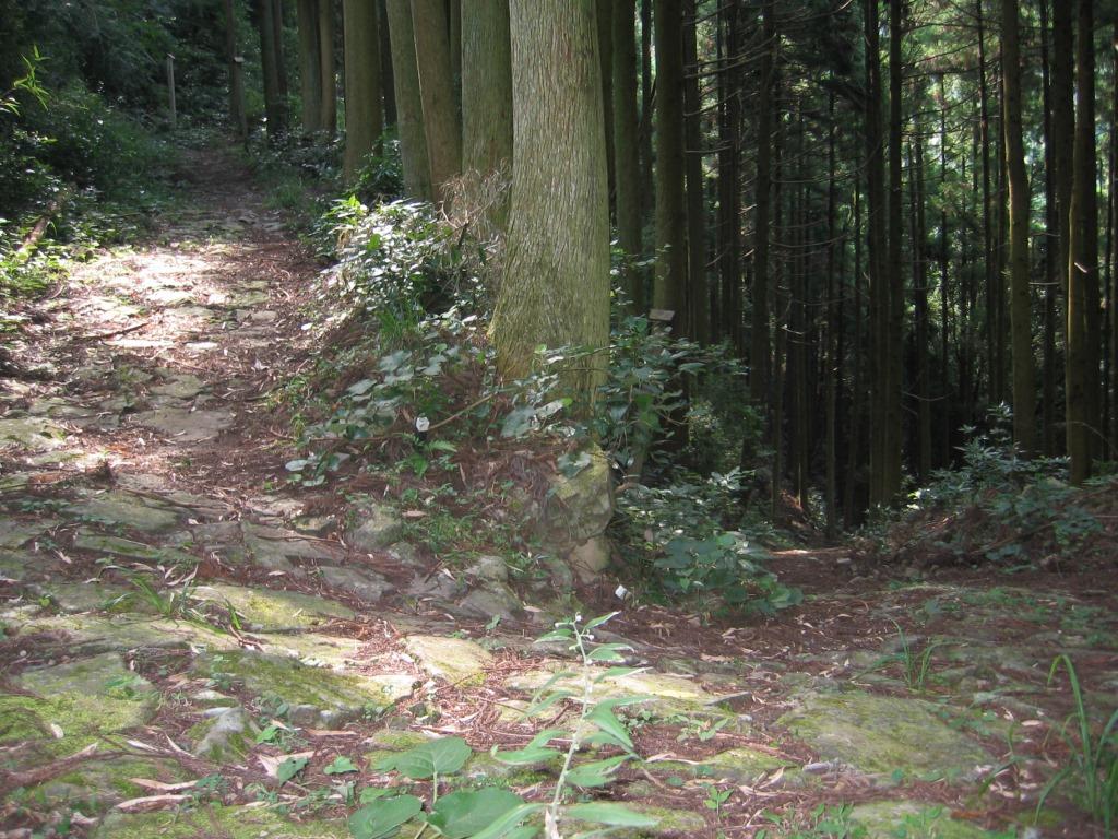 鹿ヶ瀬峠 (11)