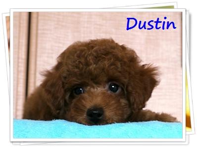 ダスティン
