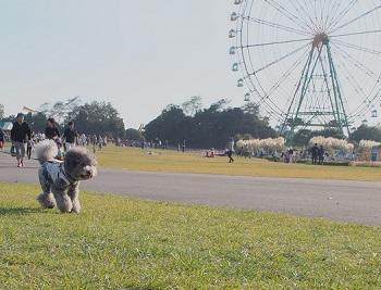 ひたち海浜公園20141019-4