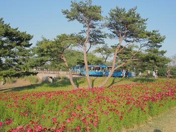 ひたち海浜公園20141019-7