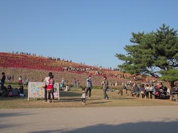 ひたち海浜公園20141019-9