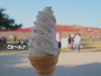ひたち海浜公園20141019-11