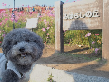 ひたち海浜公園20141019-16