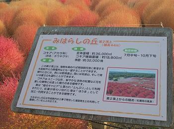 ひたち海浜公園20141019-17