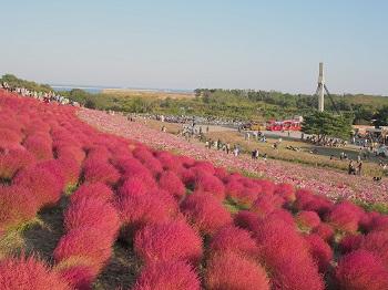 ひたち海浜公園20141019-19