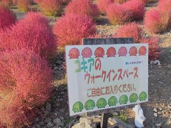 ひたち海浜公園20141019-21