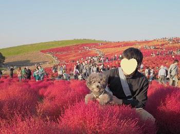 ひたち海浜公園20141019-23