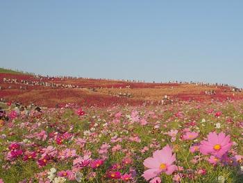ひたち海浜公園20141019-26-2