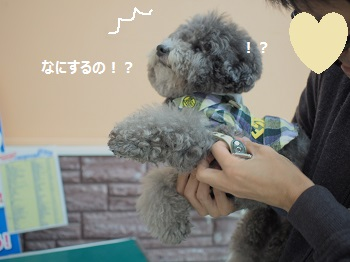 ジョイフル本田4