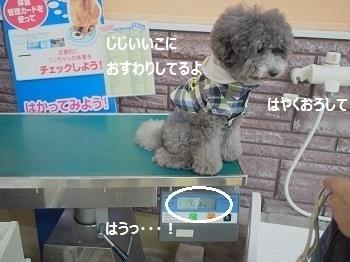 ジョイフル本田7