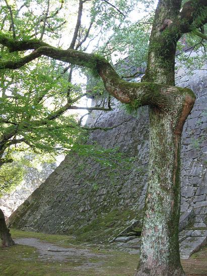 熊本旅行:熊本城 石垣
