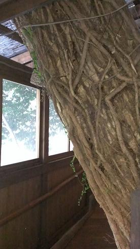 熊本旅行:黒川温泉 いこい旅館 蘇の湯2