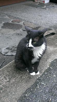 熊本旅行:黒川温泉 野良猫