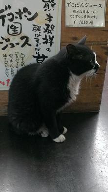 熊本旅行:黒川温泉 野良猫2