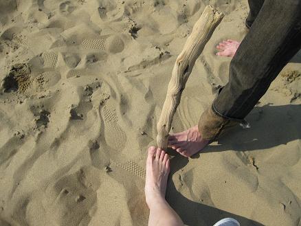 鳥取旅行;鳥取砂丘 流木