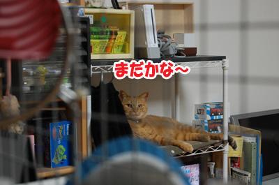 20130518a.jpg