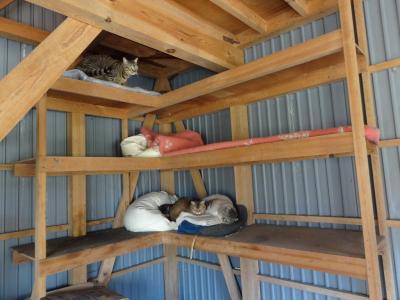 猫ハウス1