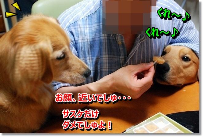 DSC_0031_20130808200242cc7.jpg
